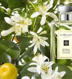오렌지 블라썸 ORANGE BLOSSOM [ JO MALONE TYPE ]